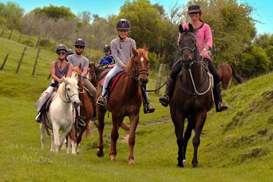 Rotorua Horse Treks 2 Hour Tour